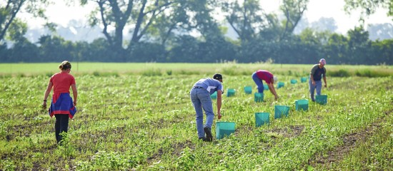 combien-y-a-t-il-d-associations-agricoles-employeuses