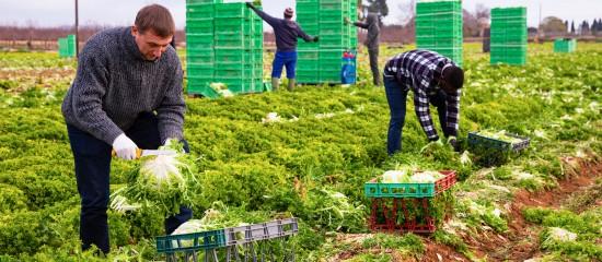 travailleurs-agricoles-etrangers-un-retour-en-france-sous-conditions