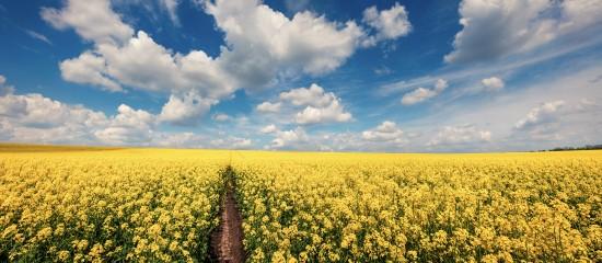 agriculteurs-les-aides-a-la-production-d-especes-riches-en-proteines-bientot-disponibles