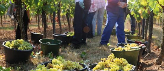viticulteurs-vers-un-renforcement-des-aides-du-fonds-de-solidarite
