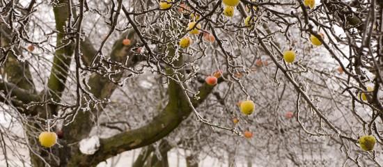 viticulteurs-arboriculteurs-cerealiers-1-md-d-aides-pour-les-victimes-du-gel