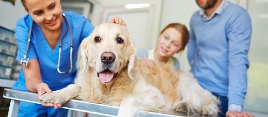 veterinaires-des-aides-pour-les-praticiens-en-zones-fragiles