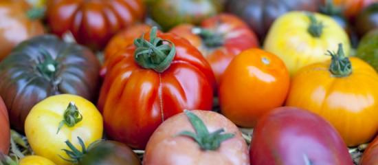 maraichers-lutte-contre-le-virus-de-la-tomate