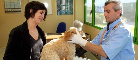 veterinaires-31