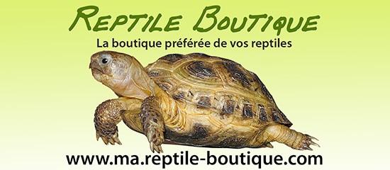 Reptile-boutique.com: une e-boutique pour amateurs de reptiles